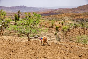 farmer in Ethiopia working on her crops
