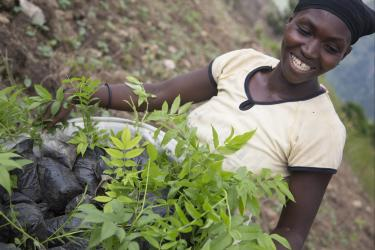 A woman with a bucket of seedlings ready to plant