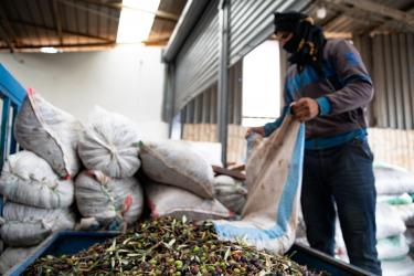 A person dumps olives onto a pile in a room filled with bags of olives.
