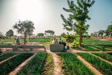 Gardening group in Mali